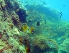 Nâng cao khả năng phục hồi các sinh kế cộng đồng và quản lý thích ứng các khu bảo tồn biển Việt Nam