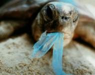 Rác thải và Môi trường biển (Phần 2)