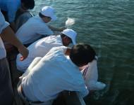 Hơn 31.200 cá thể Cá giống được thả tại Ngã Ba Sình