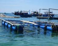Truyền thông bảo vệ rạn san hô gắn với phát triển du lịch