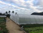 Cát Bà và mô hình trồng rau an toàn trong nhà lưới thích ứng BĐKH